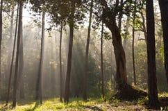 Luz del sol en bosque Fotos de archivo