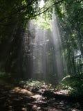 Luz del sol en bosque Imágenes de archivo libres de regalías