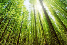 Luz del sol en bosque Imagen de archivo