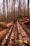 Luz del sol en bosque escénico Foto de archivo