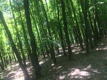 Luz del sol en el bosque imagen de archivo libre de regalías