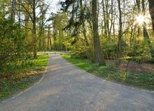 Luz del sol en el bosque verde, callejón del tiempo de primavera Fotos de archivo libres de regalías