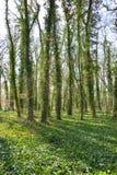 Luz del sol en el bosque verde, tiempo de primavera Imagen de archivo