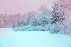 Luz del sol en la opinión panorámica del bosque del invierno Cuento de hadas del invierno del panorama imágenes de archivo libres de regalías