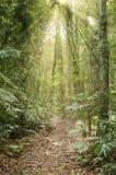 Luz del sol en la selva tropical fotografía de archivo libre de regalías