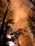 Luz del sol en los árboles Fotos de archivo libres de regalías
