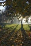 Luz del sol en madera del otoño Foto de archivo libre de regalías