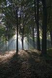 Luz del sol en otoño foto de archivo