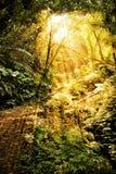 Luz del sol en selva tropical imagenes de archivo