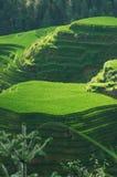 Luz del sol en terrazas del arroz Foto de archivo libre de regalías