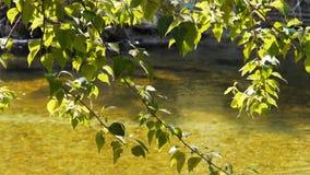 luz del sol en un árbol en el río merced en yosemite almacen de metraje de vídeo
