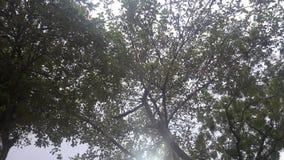 Luz del sol filtrada Fotos de archivo