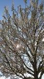 Luz del sol glinting a través del flor de la primavera Imagen de archivo libre de regalías