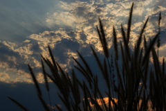 Luz del sol hermosa y silueta de la naturaleza fotos de archivo