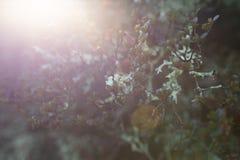 Luz del sol del invierno que brilla a través de arbustos foto de archivo libre de regalías