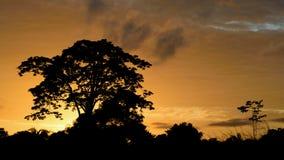 Luz del sol Mirandino Fotografía de archivo libre de regalías