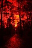 Luz del sol misteriosa en un bosque holandés Fotografía de archivo