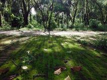 Luz del sol misteriosa a través de árboles en Lumbini, lugar de nacimiento de Buda Fotografía de archivo libre de regalías