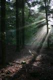 Luz del sol que alcanza el suelo del bosque Foto de archivo