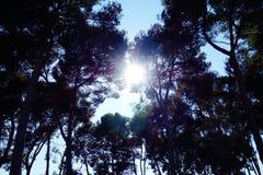 Luz del sol que estalla a través de árboles Fotos de archivo libres de regalías