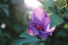 Luz del sol que filtra a través Imagenes de archivo