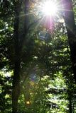 Luz del sol que se rompe a través de árboles Imagen de archivo libre de regalías