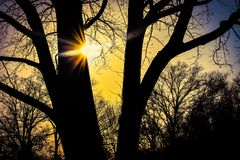 Luz del sol que toca el árbol en la puesta del sol amarilla brillante fotos de archivo