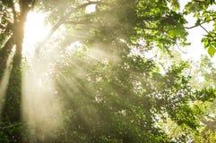 Luz del sol, rayo de sol hermoso en jardín imagen de archivo