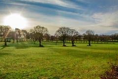 Luz del sol sobre árboles desnudos en Parkland verde, Irlanda foto de archivo