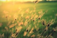 Luz del sol; sol; ; irradie; Imágenes de archivo libres de regalías