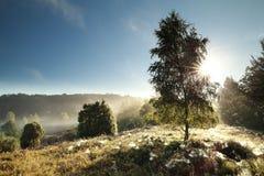 Luz del sol a través del árbol de abedul Imagen de archivo