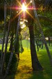 Luz del sol a través de árboles Imagen de archivo libre de regalías