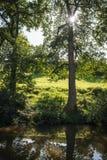 Luz del sol a través de árboles Fotos de archivo