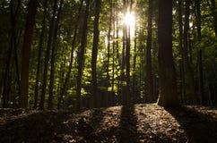 Luz del sol a través de árboles Fotografía de archivo libre de regalías