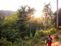 Luz del sol a través de árboles en bosque Imagen de archivo libre de regalías