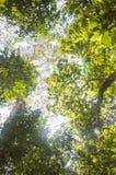 Luz del sol a través de la flora de la selva en el parque nacional de Periyar, la India fotos de archivo libres de regalías