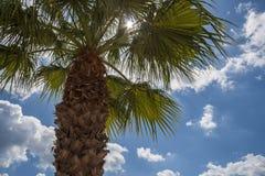 Luz del sol a través de la palmera Fotos de archivo libres de regalías