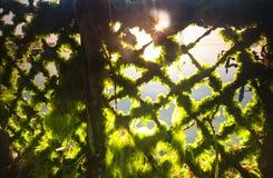 Luz del sol a través de la red agrícola en Bali, Indonesia de la alga marina Foto de archivo libre de regalías