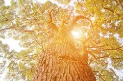 Luz del sol a través de las hojas Fotos de archivo libres de regalías