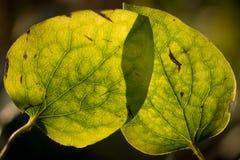 Luz del sol a través de las hojas Imagenes de archivo