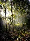 Luz del sol a través de las hojas Imagen de archivo libre de regalías
