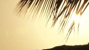 Luz del sol a través de las hojas de palma metrajes