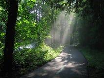 Luz del sol a través de las maderas Foto de archivo