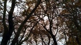 Luz del sol a través de los árboles fotografía de archivo