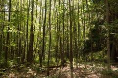 Luz del sol a través de los árboles Imágenes de archivo libres de regalías