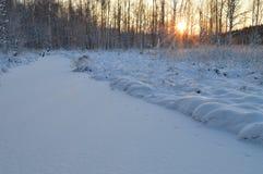 Luz del sol a través de los árboles nevosos del sol brillante del invierno en el amanecer Imagenes de archivo