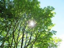 Luz del sol a través de ramas de árboles Imagen de archivo libre de regalías