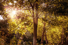 Luz del sol a través del árbol Fotos de archivo