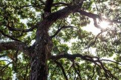 Luz del sol a través del árbol Fotos de archivo libres de regalías