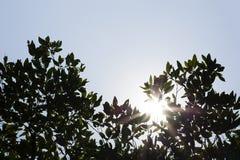 Luz del sol a través del árbol verde con el cielo de la nube Imagen de archivo